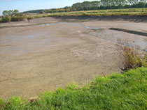 Teich 2, gegen über Naturteich.