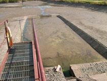 Teich 2, gegenüber Naturteich.
