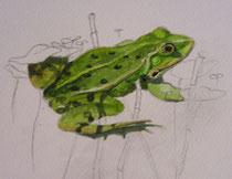 Je travaille les détails et les ombres sur la grenouille