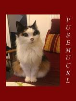 Meiner Katze Pusemuckl gewidmete Lieder