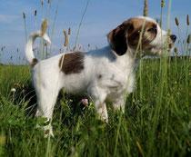 Basil aus dem Hummelgarten
