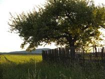 Abendsonnenlicht im Juni