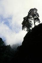 Landschaft auf La Palma, einer meiner Lieblingsinseln Foto entstanden bei einem Urlaub vor ca. 20 Jahren