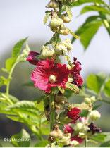 Blumen am Wegesrand (3)