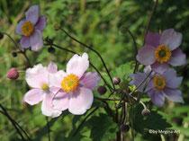 Blumen am Wegesrand (1)