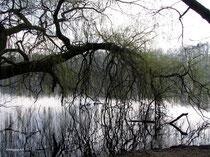 Weide am See
