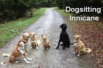 Dogsitting Innicane Zollikofen
