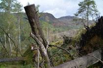 Glen Trool, Galloway Forest Park