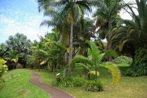 Conservatoire Botanique de Mascarin
