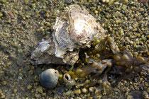 bei Brillac am Golf du Morbihan