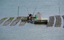 Austernzucht bei Brillac, Golf du Morbihan
