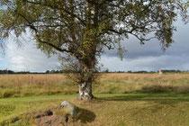 Culloden Battlefield 1746, Inverness