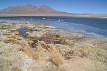 Laguna Cañapa, Bolivien