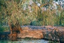 Freschwater Crocodile, Arnhemland