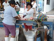 Fischmarkt, Puerto Ayora