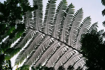 Daintree Rainforre