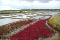 Salzgärten von Marais Salants, Guérande
