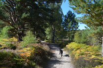Loch an Eilein, Grampian Mountains