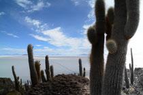 Isla Inca Huasi, Salar de Uyuni, Bolivien