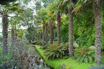 Logan Botanic Gardens, The Rinns of Galloway