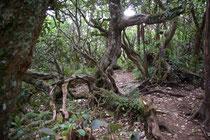 Forêt de Notre-Dame de la Paix