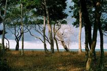 Küste bei Cooktown