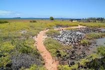 Wanderung zum Cerro Dragon, Santa Cruz