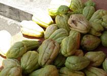 Chouchou, Gemüse für das herrliche Gratin Chouchou