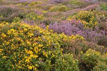 Countisbury, Exmoor National Park, GB