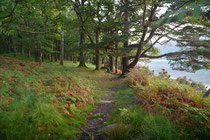 Borrowdale, Lake District, GB