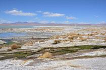 Laguna bei Termas de Chalviri, Bolivien