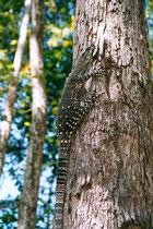 Tree Monitor
