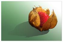 Erdbeerphysalis