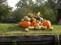Lehde, Spreewald im Herbst