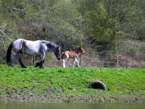 Am Ufer der Werra