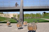 Juni 2009 - Am 15. Mai wurde der erste Abschnitt des Rheinparks in Hochfeld eröffnet. Das 26 Hektar große Gelände war vorher jahrzehntelang Industriefläche. Viel Grün, ein Rheinstrand, eine Skateranlage und diese Schaukelschafe sorgen für Freizeitwert.