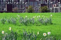 """April 2005 - Der Frühling kommt nach langem Winter und lässt die Blumen blühen. Wie hier vor dem Kraftwerk """"Hermann Wenzel"""" in Laar."""