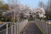 April 2012 - Der Frühling ist doch immer wieder die schönste Jahreszeit. Nach dem frostigen Februar locken Sonne und warme Temperaturen ins Freie. Und überall beginnt es zu blühen - wie hier im Businesspark Asterlagen.