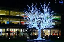 Dezember 2007 - Wieder ist der beliebte Weihnachtsmarkt eröffnet. Und die Duisburger sind irritiert: blaue Weihnachtsbäume bilden die Dekoration. Aber alle sind sich einig: dieser Lichterbaum auf dem König-Heinrich-Platz wird von allen bestaunt.