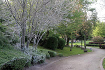 Juni 2010 - Die Gespinstmotte hüllt jedes Jahr im Frühling Bäume und Büsche zum Schutz ihrer Nachkommen ein. Ganze Baumgruppen werden mit den silbrigen Fäden überzogen. Aber schon bald ist es mit dem Spuk vorbei.