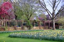 April 2014 - Der Winter fand eigentlich nicht wirklich statt. Kein Schnee und auch keine Minus-Grade. Da verwundert es nicht, dass der Frühling besonders früh einsetzt. Alles blüht und grünt - wie hier im Botanischen Garten in Duissern.