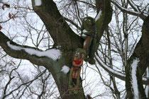 Sechs-Seen-Platte - Gnome in den Bäumen