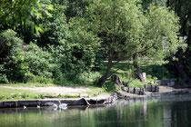Juli 2010 - Kurz bevor der Sommer mit Temperaturen von teilweise über 30 Grad so richtig in Fahrt kam zeigte sich der Uettelsheimer See in Homberg als Kleinod.