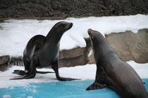 Zoo - Robben