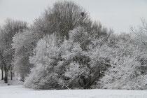 Beeckerwerth - Bäume an der Vogelwiese
