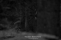 Se cacher dans les bois, Forêt d'Ecouves
