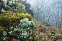 Pied du vignage, Forêt d'Ecouves