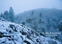 Le mont au coq bleu, Forêt d'Ecouves (230m d'altitude)