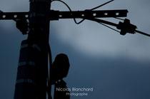 La Chevêche dans l'ombre, St Nicolas des bois