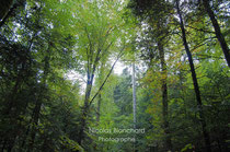 Forêt d'Ecouves